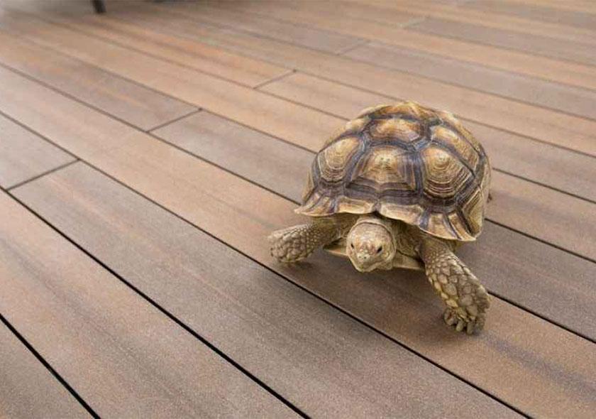 megawood-terassendiele-schildkröte